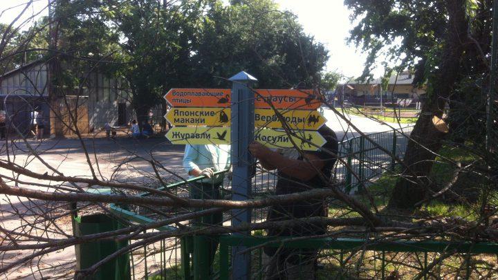 Подрезка деревьев в Минском зоопарке