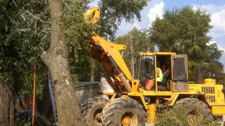 Подрезка деревьев — пример работы