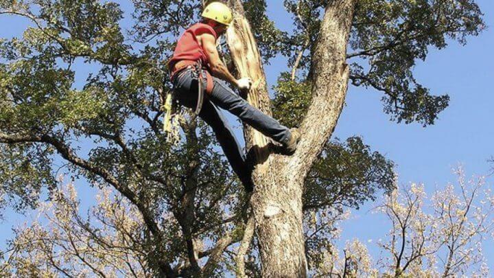 Для чего нужна обрезка деревьев в городе, плодовых деревьев и кустарников?