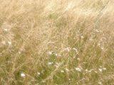 Покос травы 3
